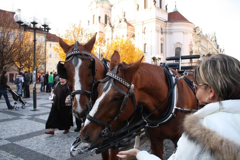 Polsko bude na národní výstavě v Janów Podlaski sportovat 150 koní